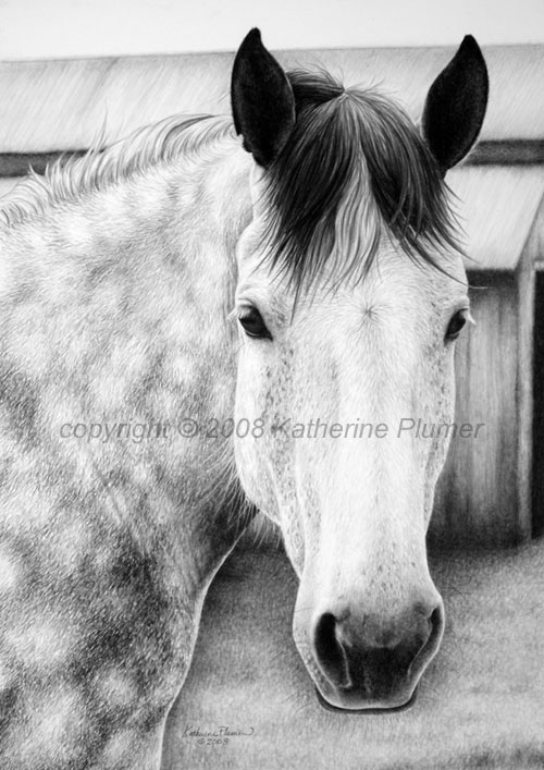 percheron graphite drawing